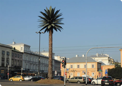 Warsaw palm tree